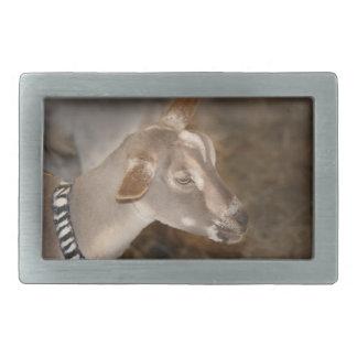 Alpine doe shaved baby goat striped face belt buckle