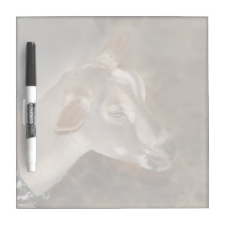 Alpine doe shaved baby goat striped face dry erase board