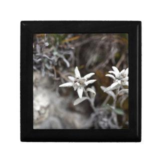 Alpine Edelweiss Gift Box