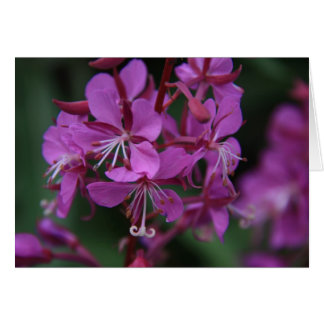 Alpine Fireweed notecard