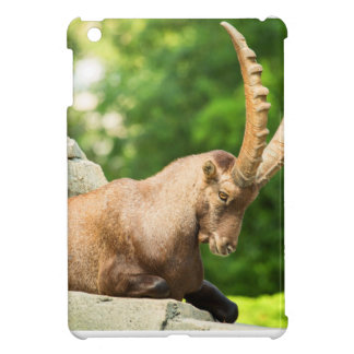 Alpine Goat Takes A Break From Climbing Cover For The iPad Mini