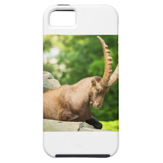 Alpine Goat Takes A Break From Climbing iPhone 5 Case