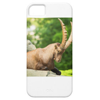 Alpine Goat Takes A Break From Climbing iPhone 5 Covers