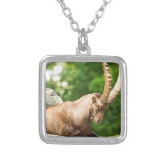 Alpine Goat Takes A Break From Climbing Silver Plated Necklace