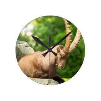 Alpine Goat Takes A Break From Climbing Wallclocks