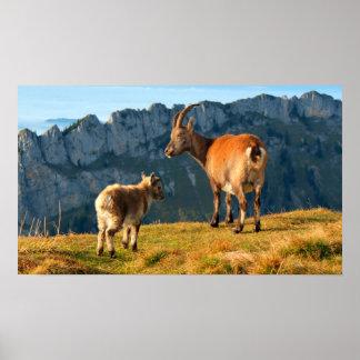 Alpine Goats Poster