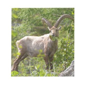 Alpine ibex eating leaves notepad