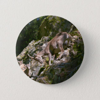 Alpine ibex in the mountain 2 inch round button