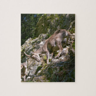Alpine ibex in the mountain jigsaw puzzle