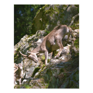 Alpine ibex in the mountain letterhead
