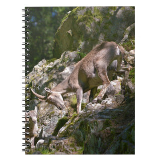 Alpine ibex in the mountain notebook