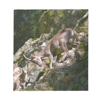 Alpine ibex in the mountain notepad