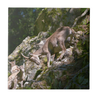 Alpine ibex in the mountain tile