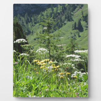 Alpine landscape with wildflowers and firs plaque