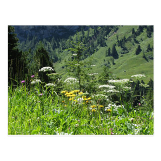 Alpine landscape with wildflowers and firs postcard