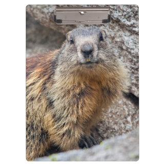 Alpine Marmot Clipboard