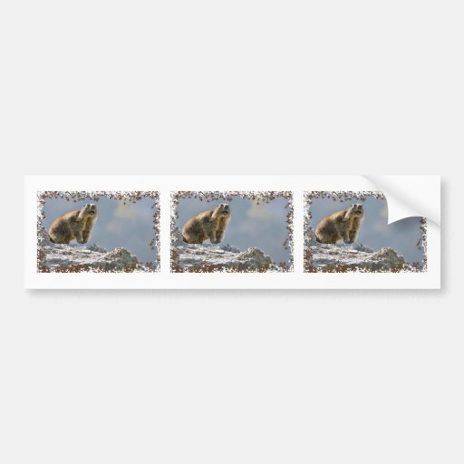 Alpine marmot in leaves frame bumper stickers