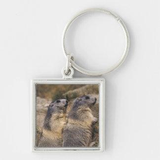Alpine Marmot, Marmota marmota, adults, Saas Silver-Colored Square Keychain
