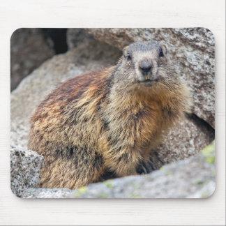 Alpine Marmot Mousemat Mouse Pad