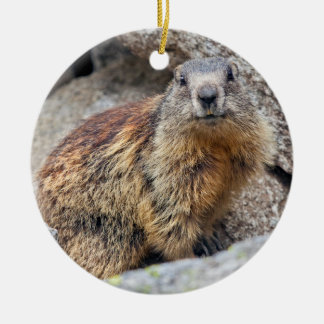 Alpine Marmot Ornament