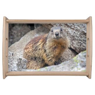 Alpine Marmot Tray