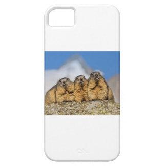 Alpine Marmots iPhone 5 Cover