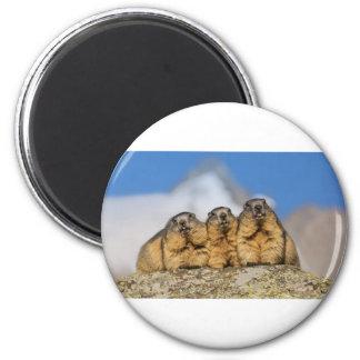 Alpine Marmots Magnet
