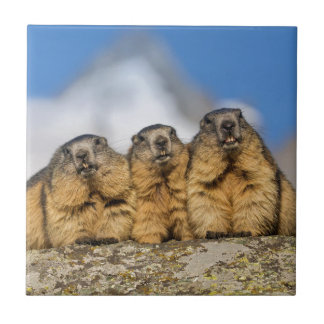 Alpine Marmots Tile