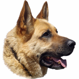Alsatian German Shepherd dog Acrylic Cut Outs