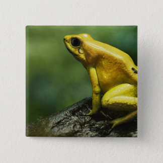 also known as Golden Dart Frog; endemic to the 2 Inch Square Button