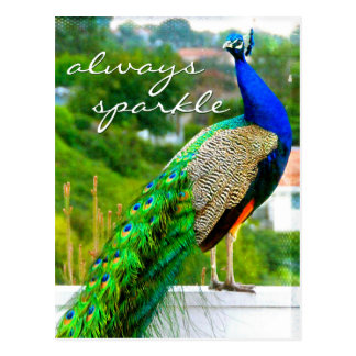 """Always sparkle"" quote blue green peacock photo Postcard"