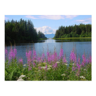 Amalga fireweed views postcard