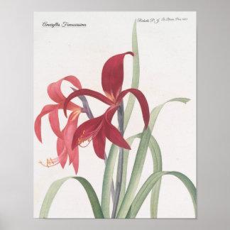 Amaryllis Fomossissima Poster