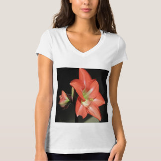 Amaryllis Hippeastrum Flowers Isolated On Black T-Shirt