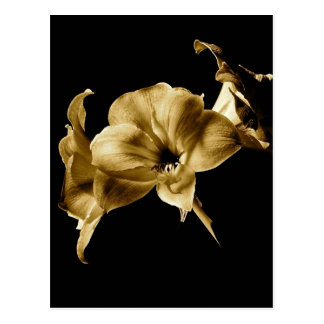 AMARYLLIS IN SEPIA WITH BLACK BACKGROUND POSTCARD