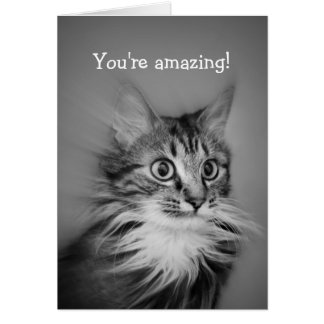 Amazed Cat With Neck Ruff Happy Birthday Card