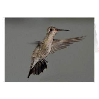 Amazilia rutila - Cinnamon Hummingbird Card