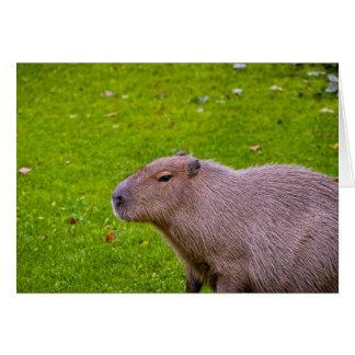 Amazing Animal Capybara Card