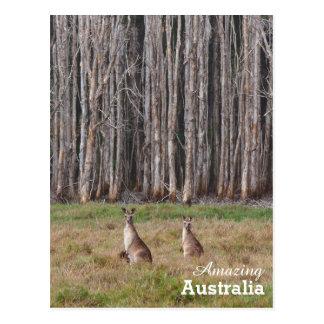 Amazing Australia postcard