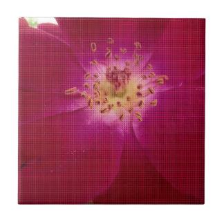 Amazing Checked Rose.jpg Tile