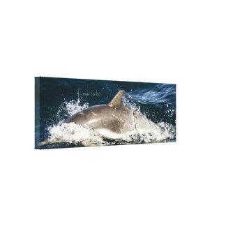 Amazing Dolphin canvas print
