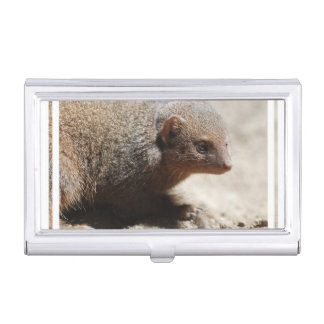 Amazing Dwarf Mongoose Business Card Holders