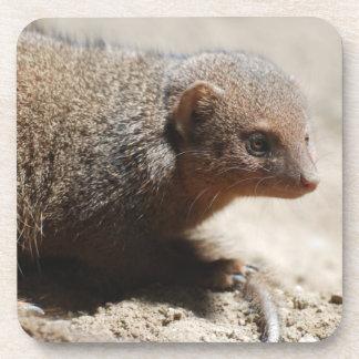 Amazing Dwarf Mongoose Coaster
