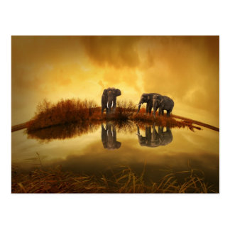 Amazing Elephant Sunset Postcard