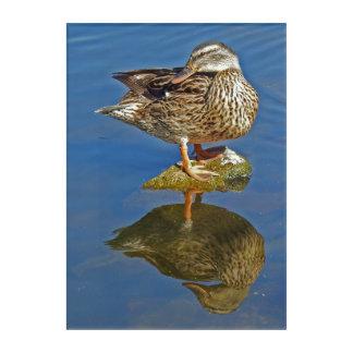 Amazing Mallard Hen Duck Reflection Acrylic Wall Art