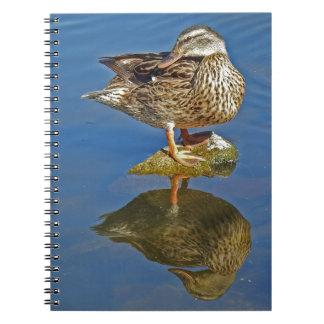 Amazing Mallard Hen Duck Reflection Notebook