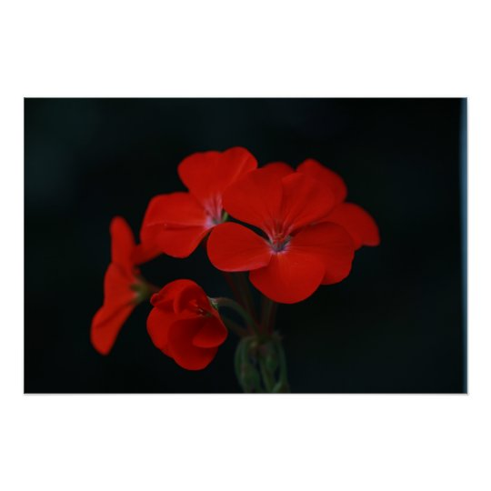 Amazing Red Flowers Poster