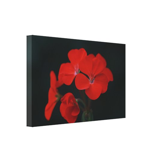 Amazing Red Flowers Stretched Canvas Print