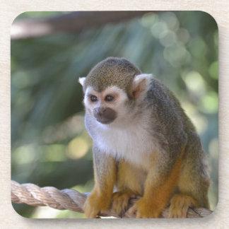 Amazing Squirrel Monkey Coaster