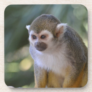 Amazing Squirrel Monkey Drink Coaster
